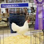 Super Grand Champion, Jerry Yeaw