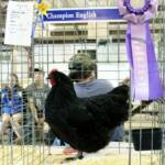 Reserve Champion Standard by Dan Castle